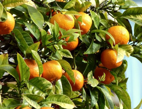 Takeaways From the 2018 Florida Citrus Show